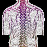 Spine 4052599 1280